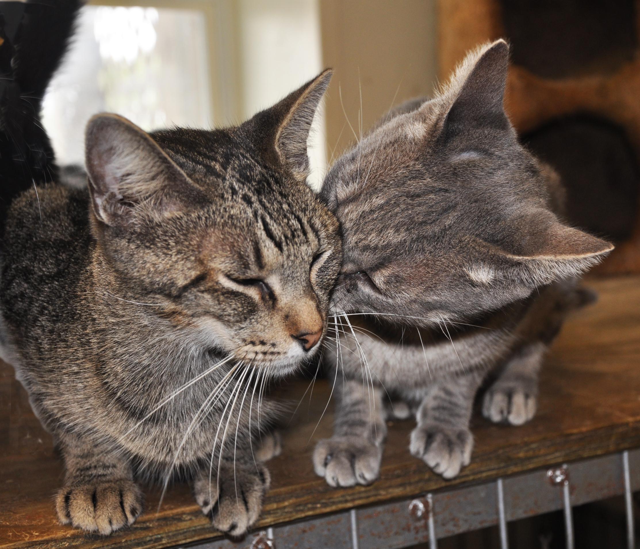 Home - Peewee's Pet Adoption World & Sanctuary, Inc.