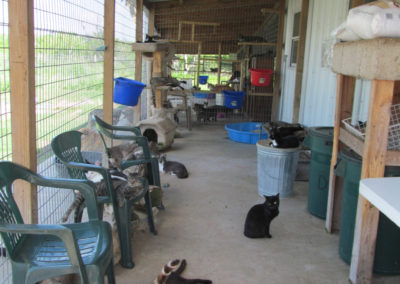 Harley's Cat Sanctuary