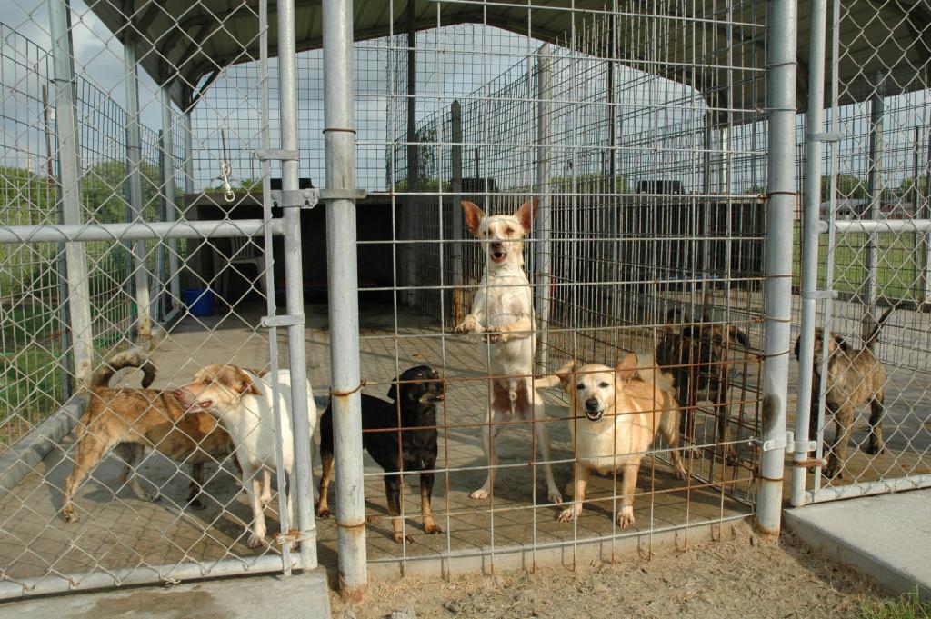 Dog Pound Kennels